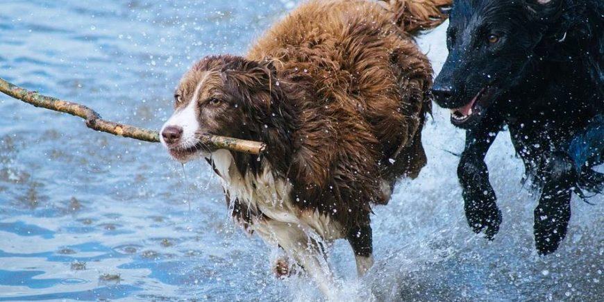 Hundefutter für Allergiker um die Gesundheit Ihres Hundes zu fördern